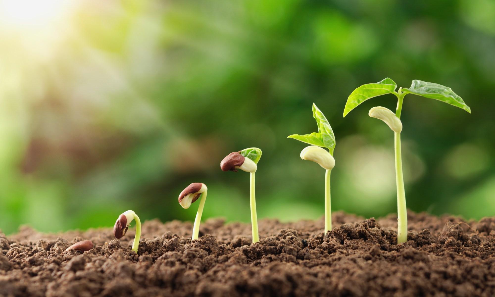 meilleure croissance des plantes