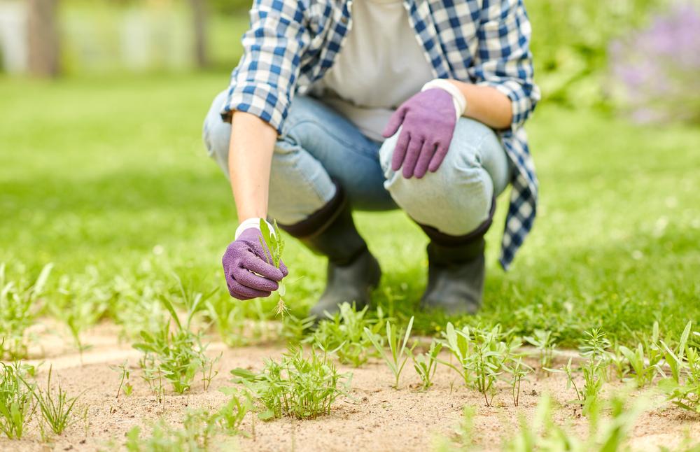 désherber son jardin
