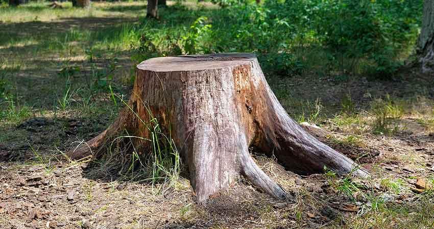 Les techniques à adopter pour retirer une souche d'arbre en toute facilité